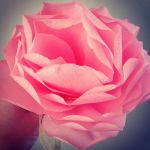 Paper rose by Isiswardrobe