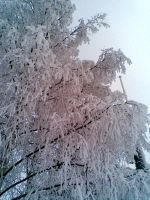 Frosty branches by Seraphi91