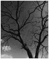 the fall bw by geyl