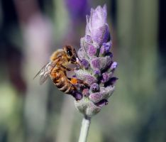 NO COLONY COLLAPSE SYNDROME by Sandy33311