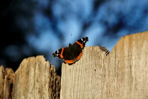 Butterfly by thepunkexperience