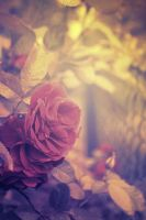 Roses by Vithiums