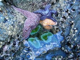 Stars and Anemones by speedyfearless