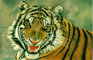 Tiger in Pencil Crayon by vicious-trollop