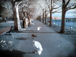 Late Afternoon Walk ll - Infrared by MichiLauke