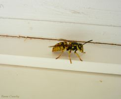 Lost wasp by Ranae490
