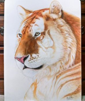 Golden Tiger by TheAmazingTrashCan