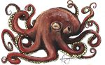 Octopus by hannalemoine