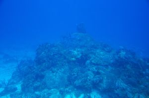 Barrier Reef 04 by FairieGoodMother