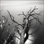 Oak in Potomac by aponom