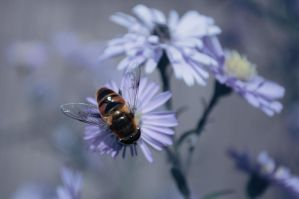 Fly on a flower by Korolevatumana