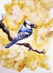 Blue Jay ..:ON AUCTION:.. by 71-Blackbird