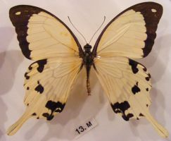 moths and butterflies stock131 by hatestock