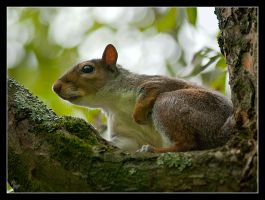 Mr squirrel 2 by Alexandra35