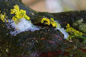 Lichen and Ice by happinessdragon