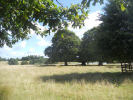Petworth House and Park 096 by VIRGOLINEDANCER1