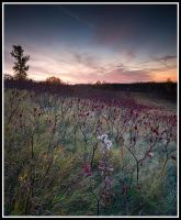 Sunrise with fall shrubs by xedgerx