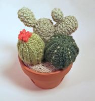 Knitted Cactus Garden by lani-enigma