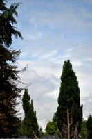 Cyprus Cedar and Sky by MicheleHansen