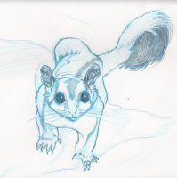 Sugar Glider in Blue by Carlzors