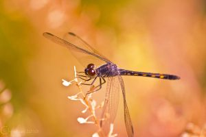 Preen by Christian1776