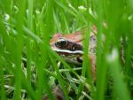 Red Frog Eye by olivia808
