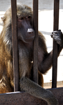 monkey_in_a_prison_by_btor-d2ygno3.png