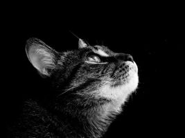 dramatic cat by valerianruby