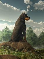 Rottweiler by deskridge