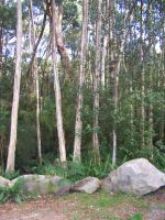 Trees And Rocks Sitting Area by Gracies-Stock