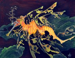 seadragon by UBERNPLUMB