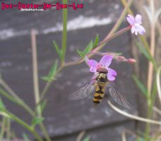 Hoverfly by Empty-Frames