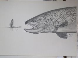 trout2 by SusHi182