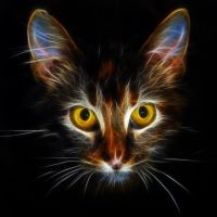 Polly the cat by Lashington