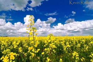Cumulus Towers and Golden Flowers by Bvilleweatherman