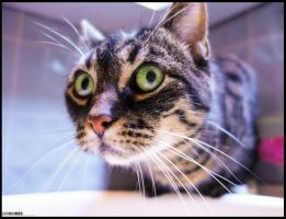 Cats who stare at walls by airglow