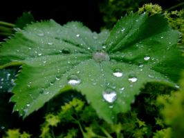 Dew drops by Fogmeister