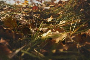 Herbst2 by yb2oDN