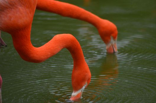 flamingos by franki-bee