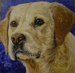 All-American Yellow Lab by NDPortraits
