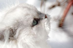 Snow cat by Fohat