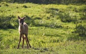 Bambi by grant-erb