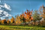 Autumn view by Sandy515