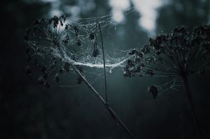autumnal sorrow by Topielica666