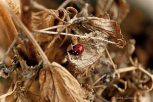 Brown and Red by AngelaLeonetti