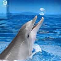 Bubble Playtime by SkyBlueDolphins