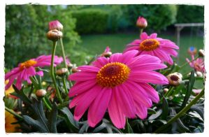 Balcony Flowers 2 by cactusmumkate