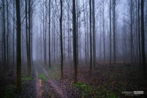 Fog nature trail by NorbertKocsis
