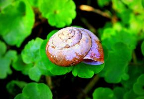 Shell-ter by Trucina