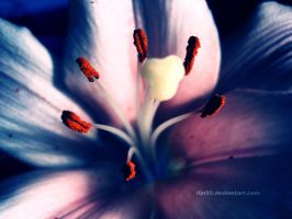 Colorful smell by djn90